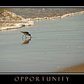 Opportunity Inspirational by David Ross