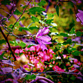Opulent Lily by Lance Sheridan-Peel