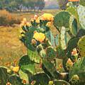 Opuntia In Bloom by David Forks