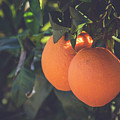 Orange #1 by Ignacio Leal Orozco