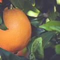 Orange #3 by Ignacio Leal Orozco
