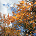 Orange And Blue by Mary Haber
