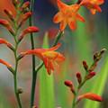 Orange And Green by Doris Potter