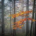 Orange And Grey by Elena Elisseeva
