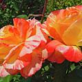 Orange And Yellow by Jo-Anne Gazo-McKim