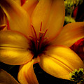 Orange And Yellow Lily by David Patterson