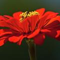 Orange Aster-a Bee's Eye View by Onyonet  Photo Studios