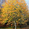 Orange Autumn Tree by Pierre Leclerc Photography