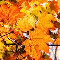 Fall Of Orange Leaves by John Williams