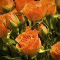 Orange Beauties by Idaho Scenic Images Linda Lantzy