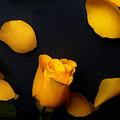 Orange Beauty 2 by Johanna Hurmerinta