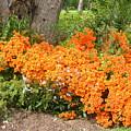 Orange Beauty by Deborah Selib-Haig DMacq