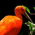 Orange Beauty by Debra     Vatalaro
