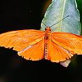 Orange Beauty by Jeffery L Bowers