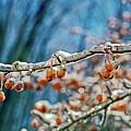 Orange Berries Encased In Ice