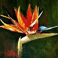 Orange Bird Of Paradise by Maureen Ghetia