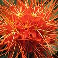 Orange Blast by April Camenisch