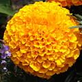 Orange Bloom by Erick Schmidt