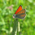 Orange Butterfly 5144 by Murielle Sunier
