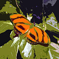 Orange Butterfly by David Lee Thompson