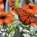 Orange Butterfly by Kay Lovingood