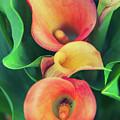 Orange Calla Lily by Natalia Macheda