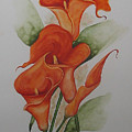 Orange Callas by Karin  Dawn Kelshall- Best