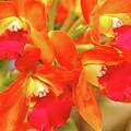 Orange Cattleya Orchid by Debbie Oppermann