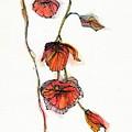 Orange by Cee Grant