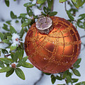 Orange Christmas Ball On Plant With Fresh Snow by William Freebilly photography