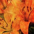 Orange Cluster 9225 Idp_2 by Steven Ward