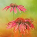 Orange Daisy Splash by Terry Davis