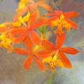 Orange Dream by Eagle  Finegan