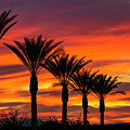 Orange Dream Palm Sunset  by Saija Lehtonen
