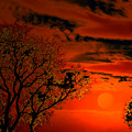 Orange Eventide by Bliss Of Art