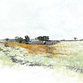 Orange Field  by Ronald Rosenberg