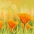 Orange Field by Veronica Minozzi