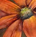 Orange Flower by Amy Kirkpatrick