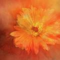 Orange Flower Energy by Terry Davis