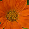 Orange Flower by Nature's Journey Photography