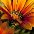 Orange Flower Print by Kelley King