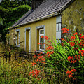 Orange Flowers At Abandoned Cottage by James Truett