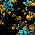 Orange Flowers by Colin Drysdale