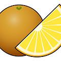 Orange Fruit Outlined by Miroslav Nemecek