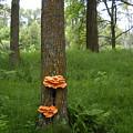 Orange Fungi On A Tree by Kent Lorentzen