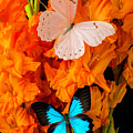 Orange Glads With Two Butterflies by Garry Gay