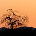Orange Glow Sunset In The Desert by Teresa Stallings