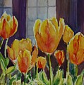 Orange Glow Tulips by Sukey Watson