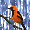 Orange-headed Oriole by Lynn Quinn