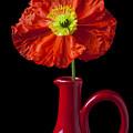 Orange Iceland Poppy In Red Pitcher by Garry Gay